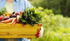Alimentação orgânica ganha cada vez mais adeptos