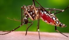 Dicas para prevenir o contato com a febre amarela